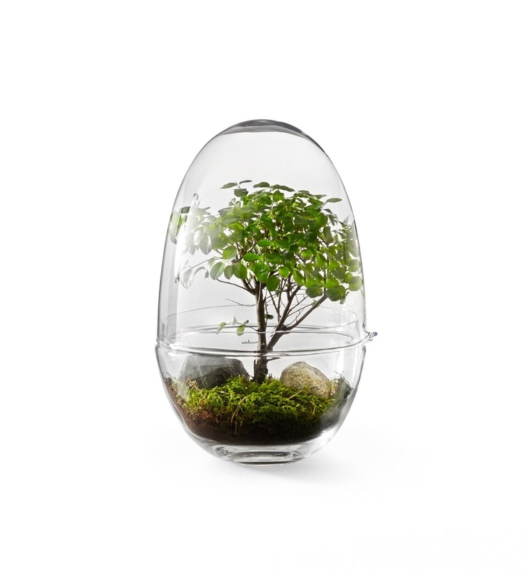 Мини-оранжерея Design House Stockholm Grow Extra Large Clear . Изображение 1
